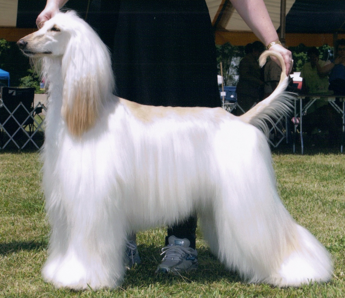 Show Me Pic Of White Dogs