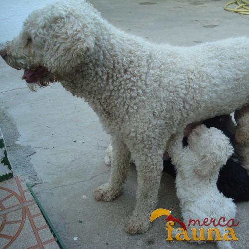compraventa com perros: