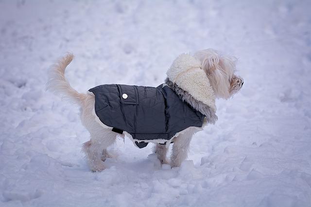 e07fa08d95b Comprar ropa para perros (Artículo) - Animales. Mascotas. | Mercafauna