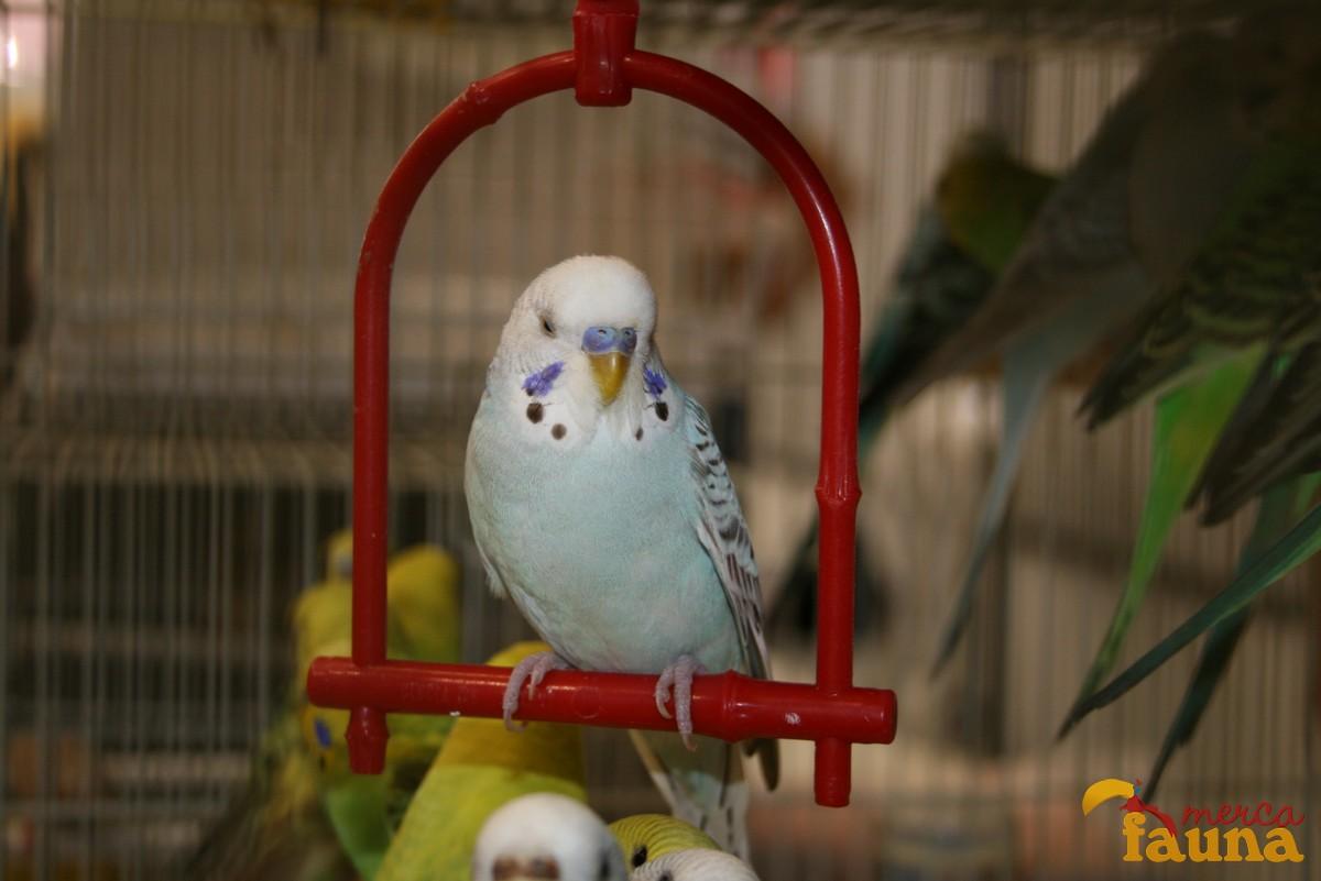 animales-mercafauna-00075