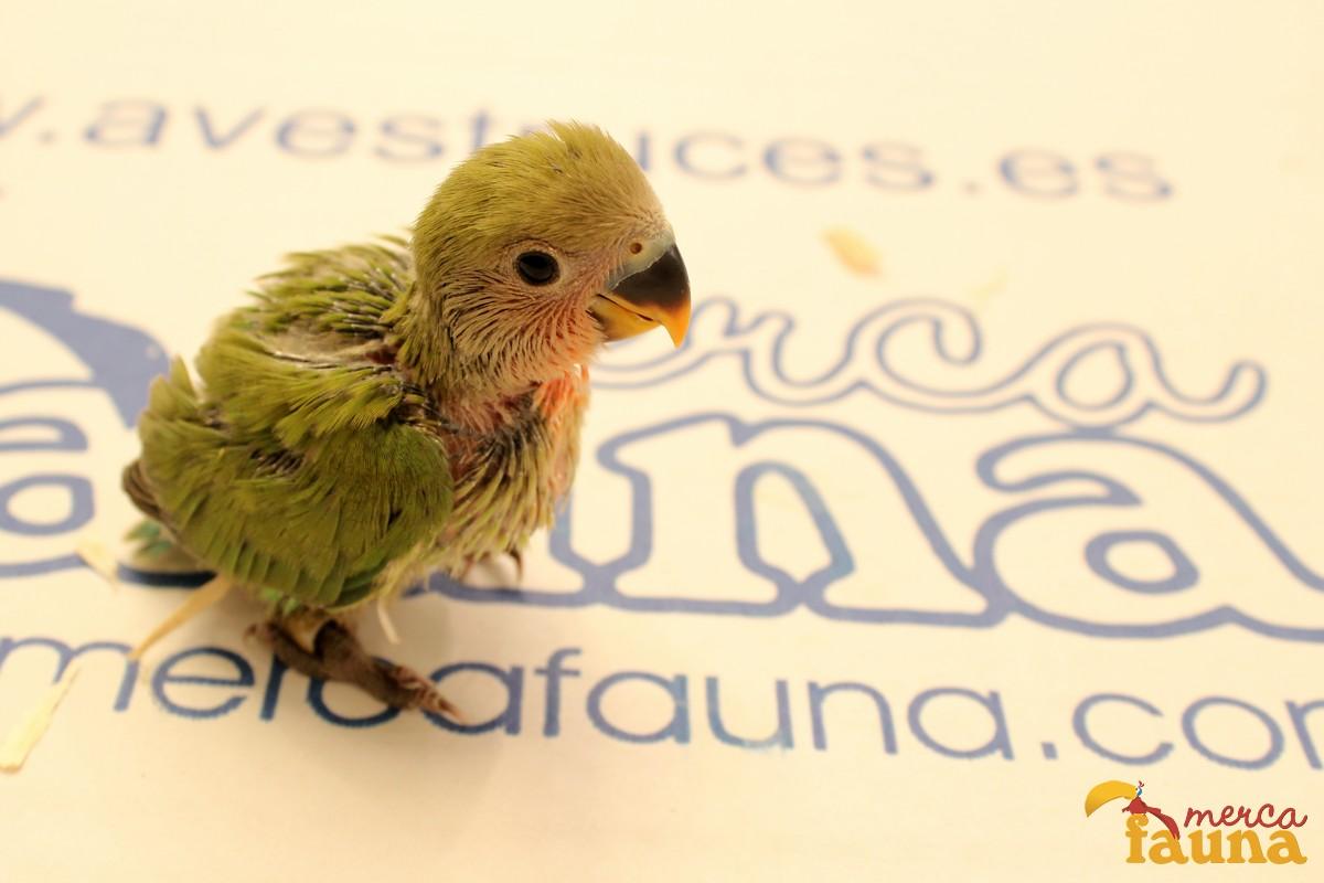 animales-mercafauna-00186