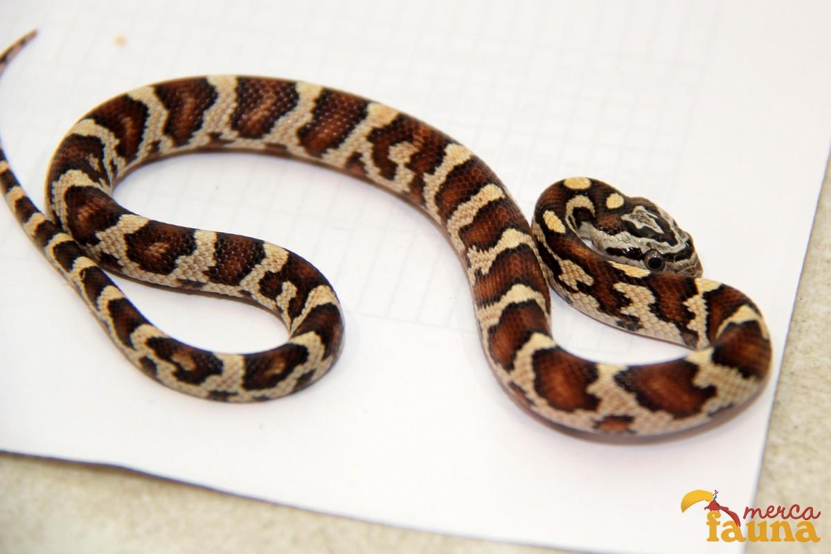 animales-mercafauna-00152