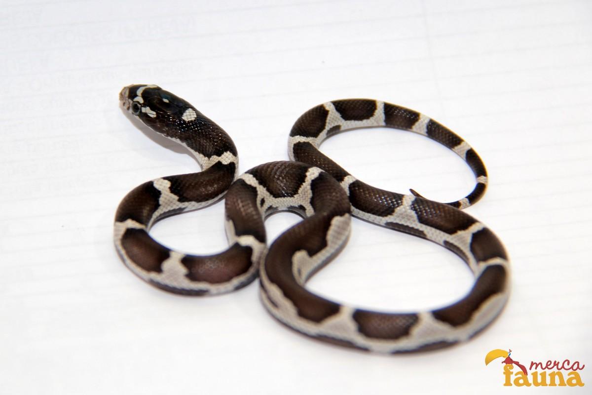 animales-mercafauna-00155