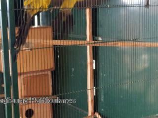 jaula completa de 2,10x2,20x 1  con unapareja deloros deroca,unapareja de rosellas mutantantes,unapareja derosellas y un macho de rosella
